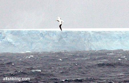giant-iceberg2